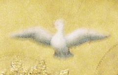 Coronation_dove_4